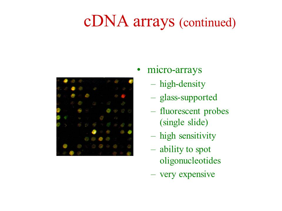 cDNA arrays (continued) micro-arrays –high-density –glass-supported –fluorescent probes (single slide) –high sensitivity –ability to spot oligonucleot