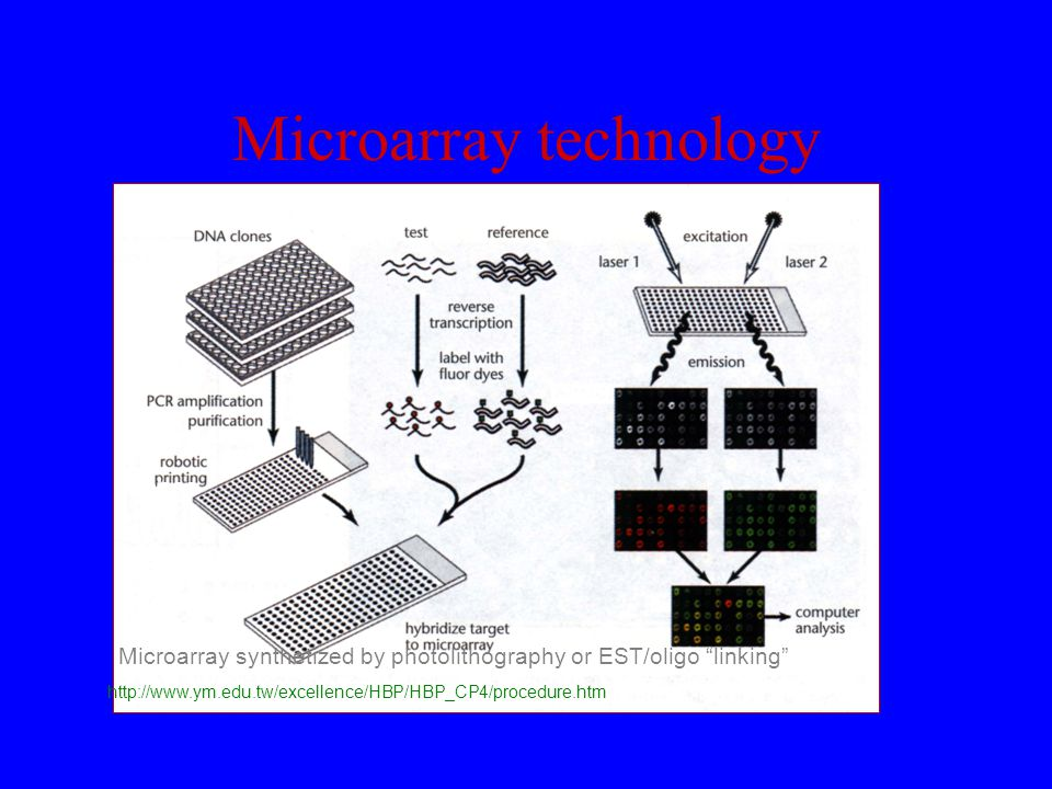 "Microarray technology http://www.ym.edu.tw/excellence/HBP/HBP_CP4/procedure.htm Microarray synthetized by photolithography or EST/oligo ""linking"" Prob"