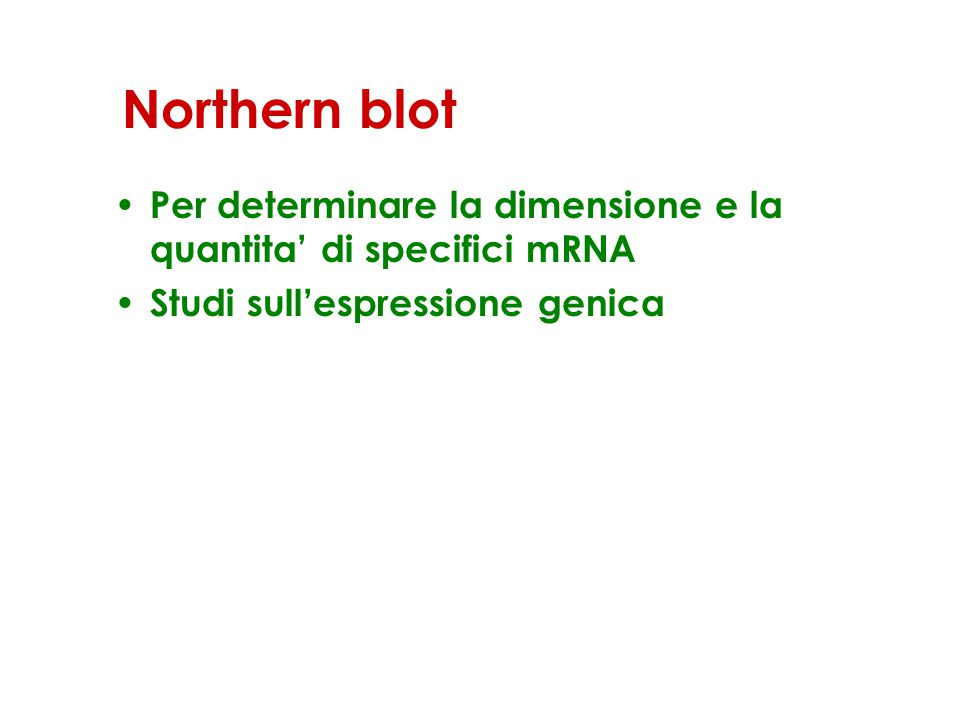 Northern blot – Elettroforesi dell'RNA in gel contenente formaldeide per mantenere l'RNA in forma completamente lineare – Trasferimento dell'RNA su una membrana – Ibridazione con una sonda marcata