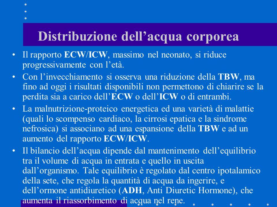 Distribuzione dell'acqua corporea Il rapporto ECW/ICW, massimo nel neonato, si riduce progressivamente con l'età. Con l'invecchiamento si osserva una