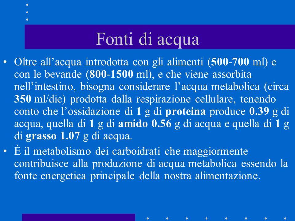 Fonti di acqua Oltre all'acqua introdotta con gli alimenti (500-700 ml) e con le bevande (800-1500 ml), e che viene assorbita nell'intestino, bisogna