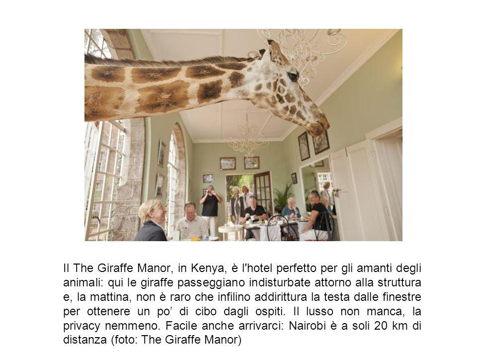 Il The Giraffe Manor, in Kenya, è l′hotel perfetto per gli amanti degli animali: qui le giraffe passeggiano indisturbate attorno alla struttura e, la mattina, non è raro che infilino addirittura la testa dalle finestre per ottenere un po' di cibo dagli ospiti.