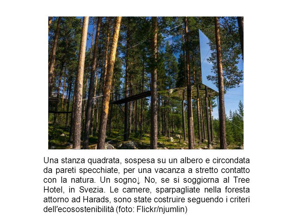 Una stanza quadrata, sospesa su un albero e circondata da pareti specchiate, per una vacanza a stretto contatto con la natura.