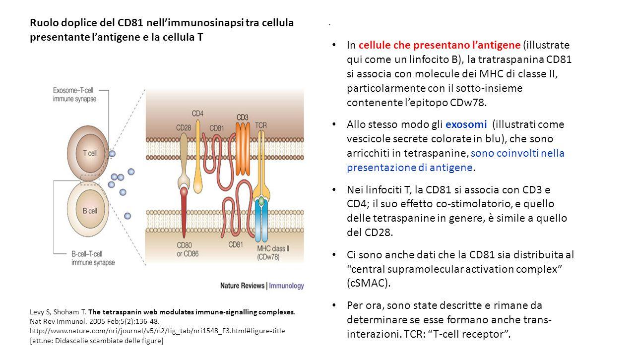 . Levy S, Shoham T. The tetraspanin web modulates immune-signalling complexes. Nat Rev Immunol. 2005 Feb;5(2):136-48. http://www.nature.com/nri/journa