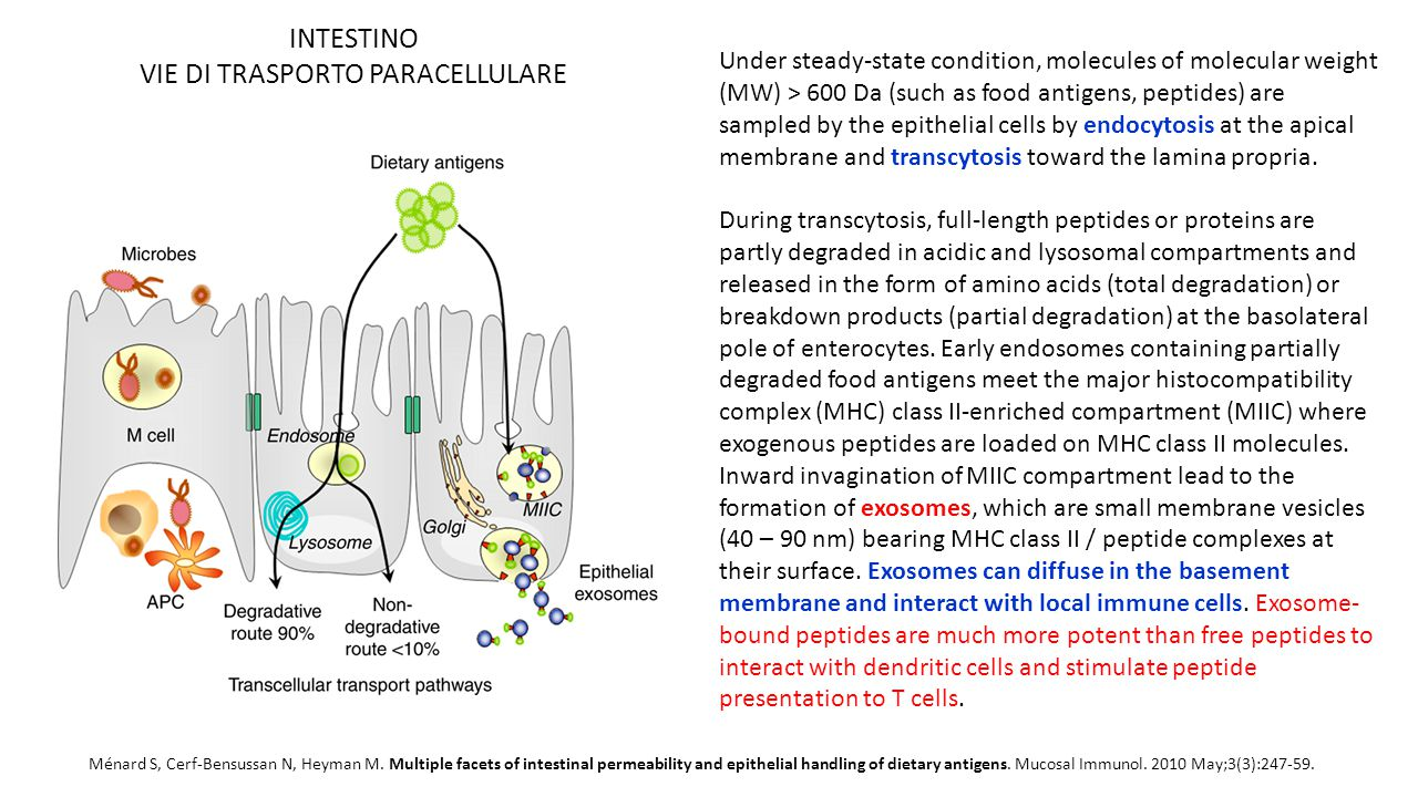 Ménard S, Cerf-Bensussan N, Heyman M. Multiple facets of intestinal permeability and epithelial handling of dietary antigens. Mucosal Immunol. 2010 Ma