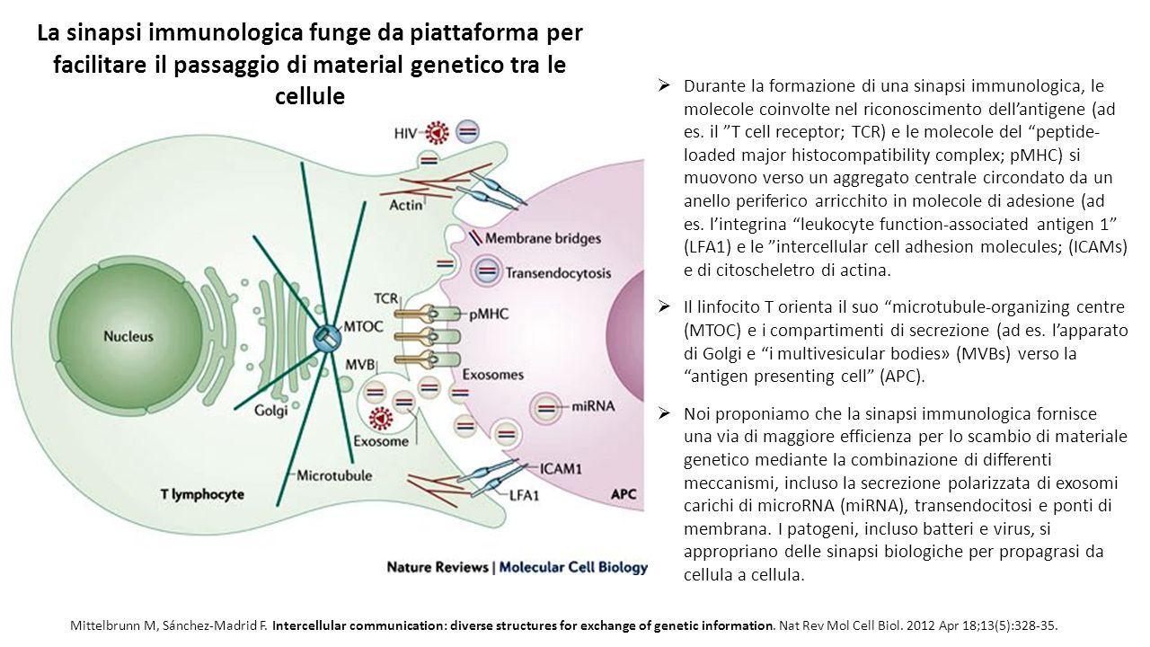 Mittelbrunn M, Sánchez-Madrid F. Intercellular communication: diverse structures for exchange of genetic information. Nat Rev Mol Cell Biol. 2012 Apr