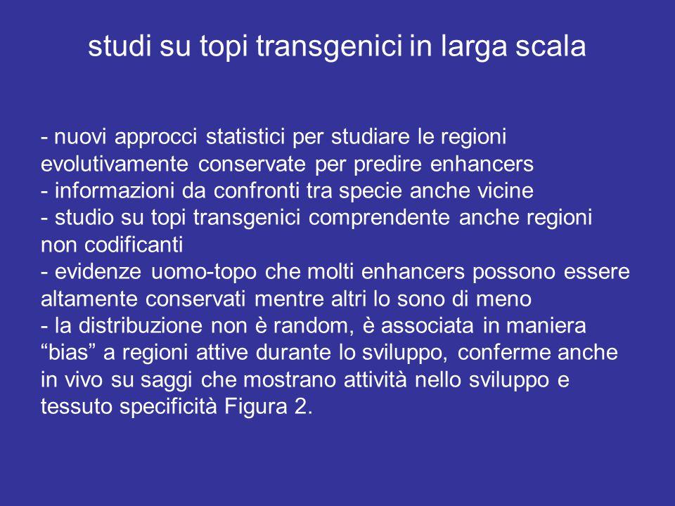 studi su topi transgenici in larga scala - nuovi approcci statistici per studiare le regioni evolutivamente conservate per predire enhancers - informa