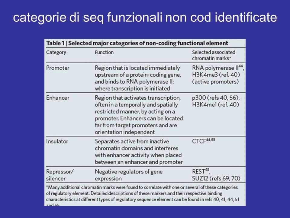 categorie di seq funzionali non cod identificate
