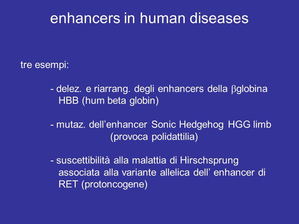 enhancers in human diseases tre esempi: - delez. e riarrang. degli enhancers della  globina HBB (hum beta globin) - mutaz. dell'enhancer Sonic Hedgeh