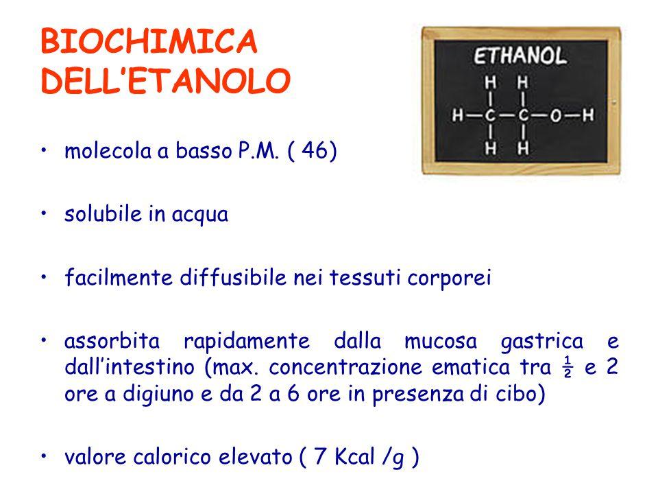 BIOCHIMICA DELL'ETANOLO molecola a basso P.M. ( 46) solubile in acqua facilmente diffusibile nei tessuti corporei assorbita rapidamente dalla mucosa g