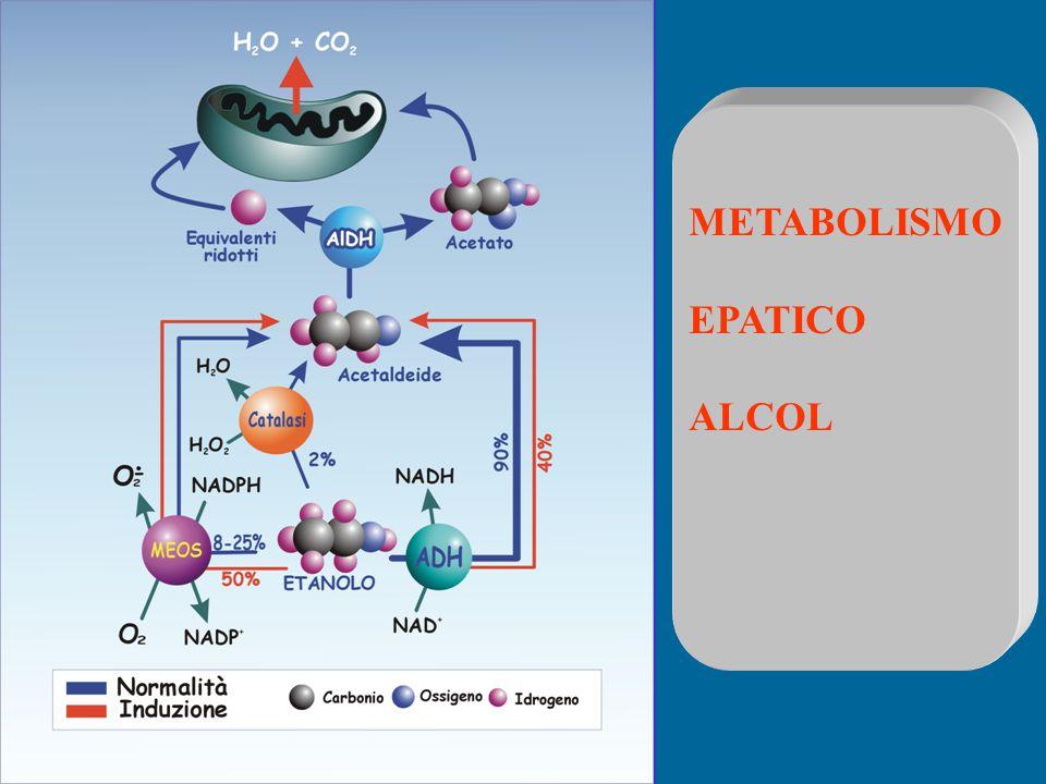 METABOLISMO EPATICO ALCOL