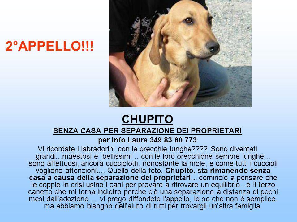 PEPPINO Patrizia 340 5365905 patrizia.dt@gmail.com Peppino è stato abbandonato al parcheggio di un grande supermercato. E' stato adottato circa 3 mesi