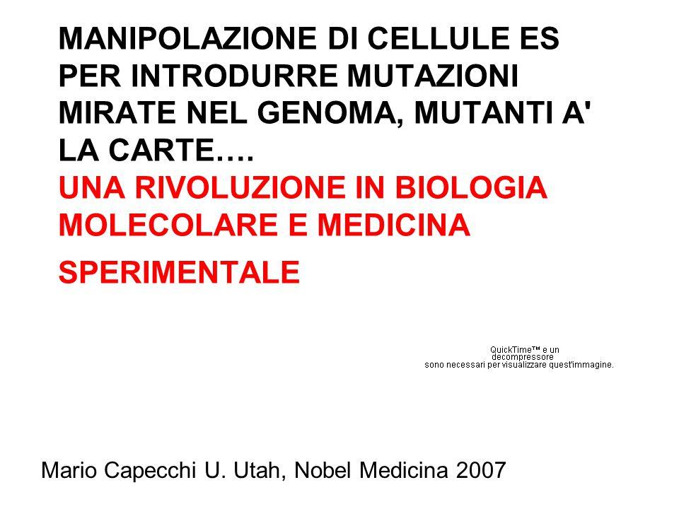 MANIPOLAZIONE DI CELLULE ES PER INTRODURRE MUTAZIONI MIRATE NEL GENOMA, MUTANTI A' LA CARTE…. UNA RIVOLUZIONE IN BIOLOGIA MOLECOLARE E MEDICINA SPERIM