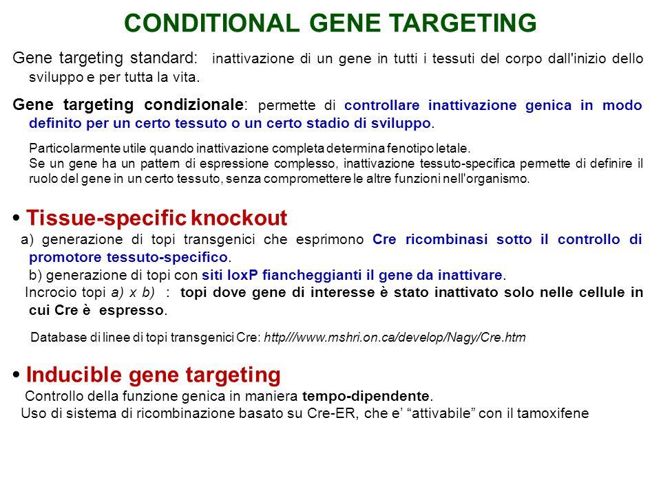 Gene targeting standard: inattivazione di un gene in tutti i tessuti del corpo dall'inizio dello sviluppo e per tutta la vita. Gene targeting condizio