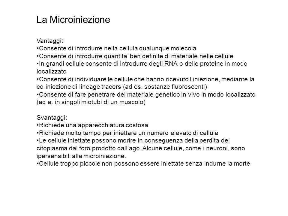 La Microiniezione Vantaggi: Consente di introdurre nella cellula qualunque molecola Consente di introdurre quantita' ben definite di materiale nelle c