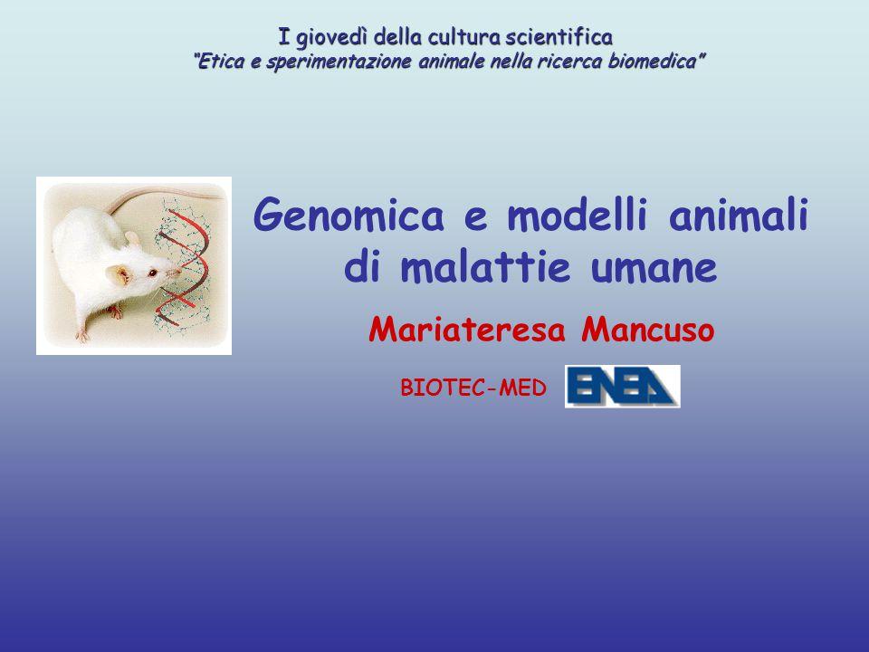 """Genomica e modelli animali di malattie umane Mariateresa Mancuso BIOTEC-MED I giovedì della cultura scientifica """"Etica e sperimentazione animale nella"""