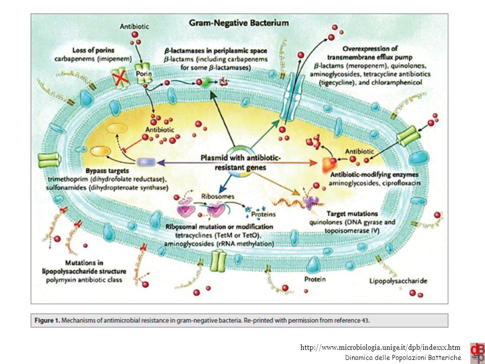 http://www.microbiologia.unige.it/dpb/indexxx.htm Dinamica delle Popolazioni Batteriche