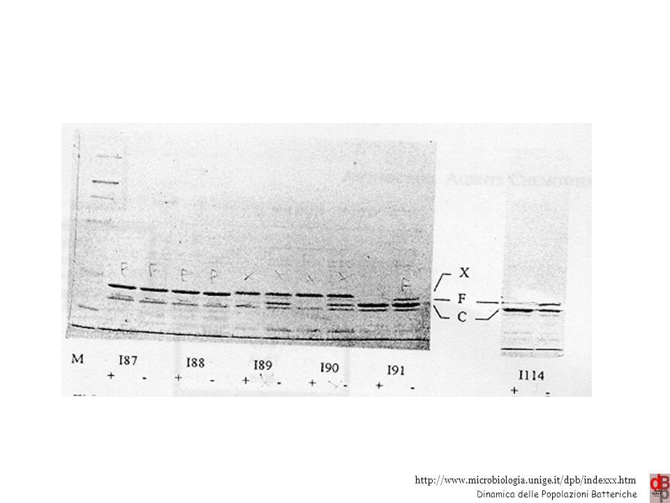 http://www.microbiologia.unige.it/dpb/indexxx.htm Dinamica delle Popolazioni Batteriche Impermeabilità Alterate o assenti OMP es. chinoloni e  - latt
