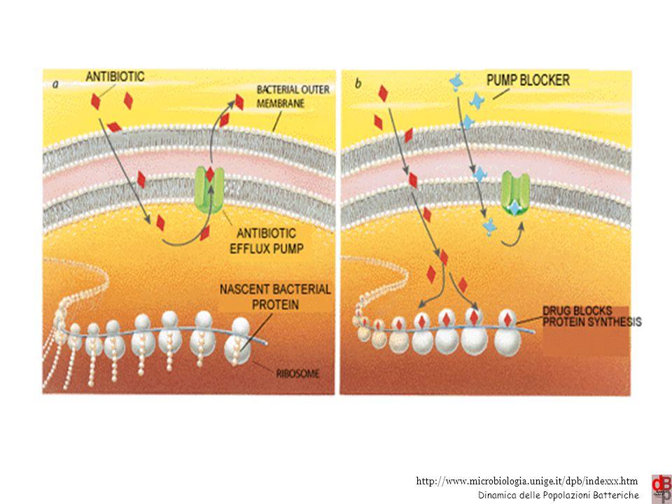 http://www.microbiologia.unige.it/dpb/indexxx.htm Dinamica delle Popolazioni Batteriche Efflusso es.: tetracicline (tet), macrolidi (mef), chinoloni (