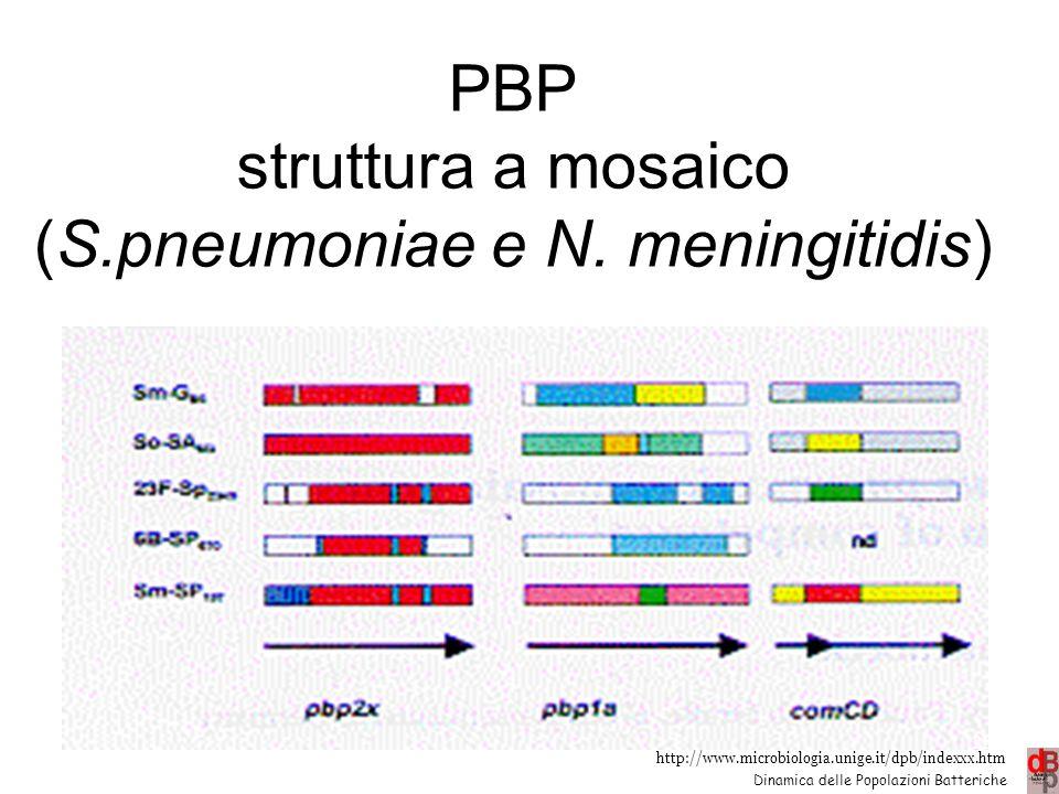 http://www.microbiologia.unige.it/dpb/indexxx.htm Dinamica delle Popolazioni Batteriche PBP struttura a mosaico (S.pneumoniae e N. meningitidis) 28