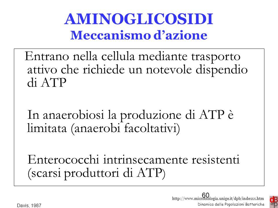 http://www.microbiologia.unige.it/dpb/indexxx.htm Dinamica delle Popolazioni Batteriche AMINOGLICOSIDI Meccanismo d'azione Entrano nella cellula media