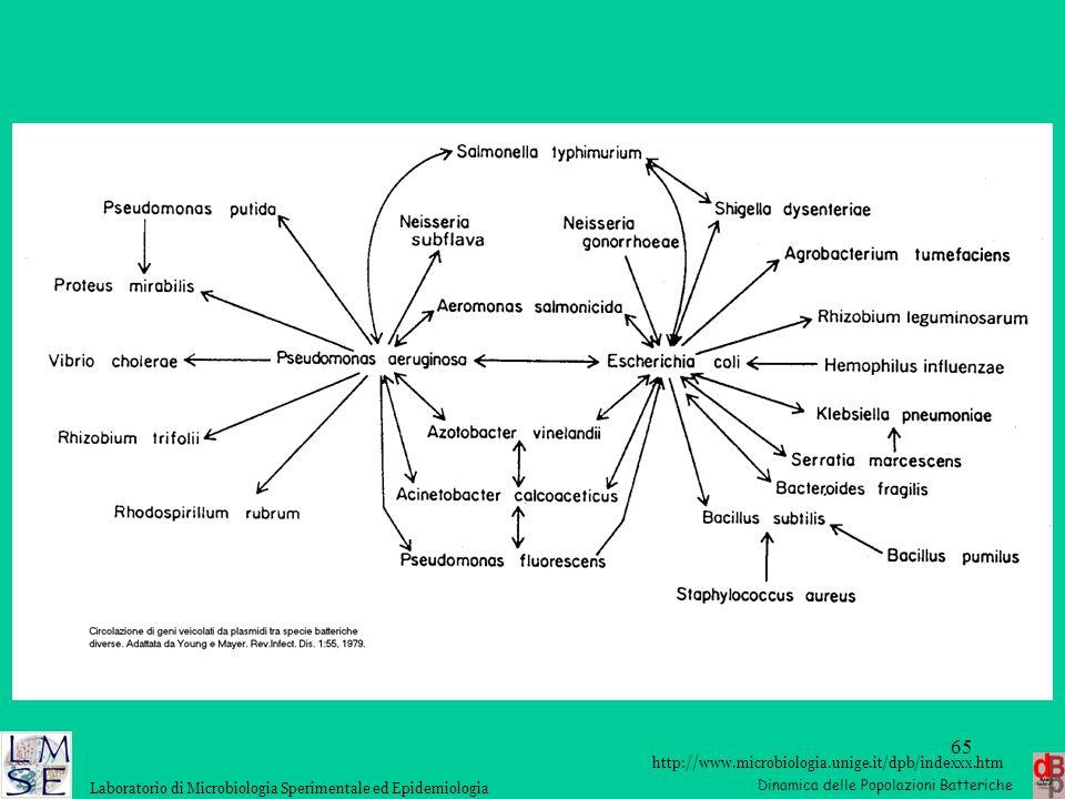 http://www.microbiologia.unige.it/dpb/indexxx.htm Dinamica delle Popolazioni Batteriche Laboratorio di Microbiologia Sperimentale ed Epidemiologia 65
