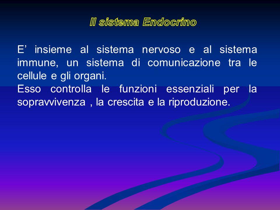 E' insieme al sistema nervoso e al sistema immune, un sistema di comunicazione tra le cellule e gli organi. Esso controlla le funzioni essenziali per