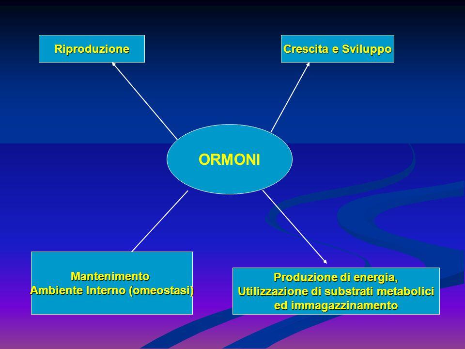 Riproduzione 1.Gametogenesi 2.Dimorfismo sessuale 3.Differenze nell'espressione degli ormoni sessuali 4.Pubertà 5.Menopausa Crescita e Sviluppo ( Peptidi, Steroidi, Catecolamine, Ormoni Tiroidei ) 1.Età ossea 2.Chiusura dell'epifisi ossee cartilagine 3.Sviluppo del sistema nervoso centrale Produzione di energia, Utilizzazione ed immagazzinamento 1.Stato anabolico dopo un pasto- Insulina 2.Stato catabolico digiuno-Glucagone e ormoni controregolatori 3.Metabolismo basale