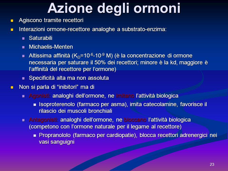 23 Azione degli ormoni Agiscono tramite recettori Agiscono tramite recettori Interazioni ormone-recettore analoghe a substrato-enzima: Interazioni orm