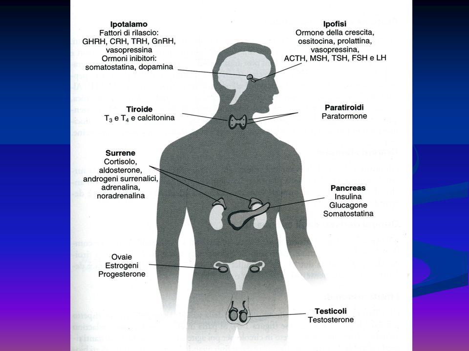 Ipofisi: GH, PRL, TSH, ACTH, FSH, LH, MSH, ADH, Ossitocina TIroide: T3, T4, calcitonina Surreni : aldosterone, cortisolo, adrenalina, noradrenalina Ovaie: estrogeni, progesterone Testicoli: testosterone Pancreas endocrino: glucagone, insulina, somatostatina Mammella