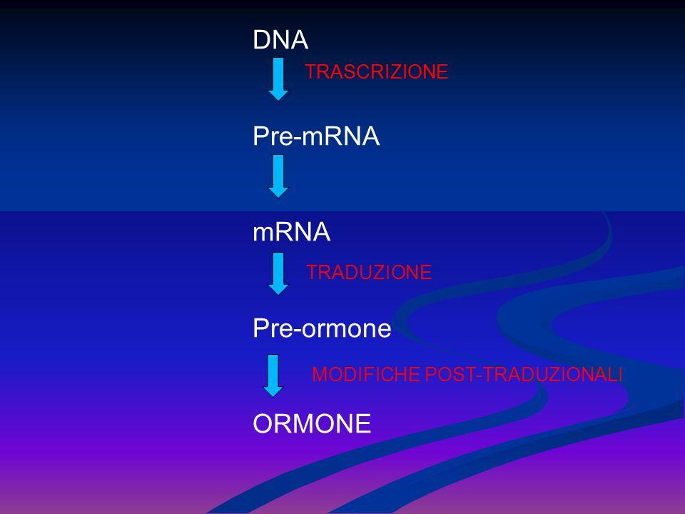 DNA Pre-mRNA mRNA Pre-ormone ORMONE TRASCRIZIONE TRADUZIONE TRASCRIZIONE MODIFICHE POST-TRADUZIONALI