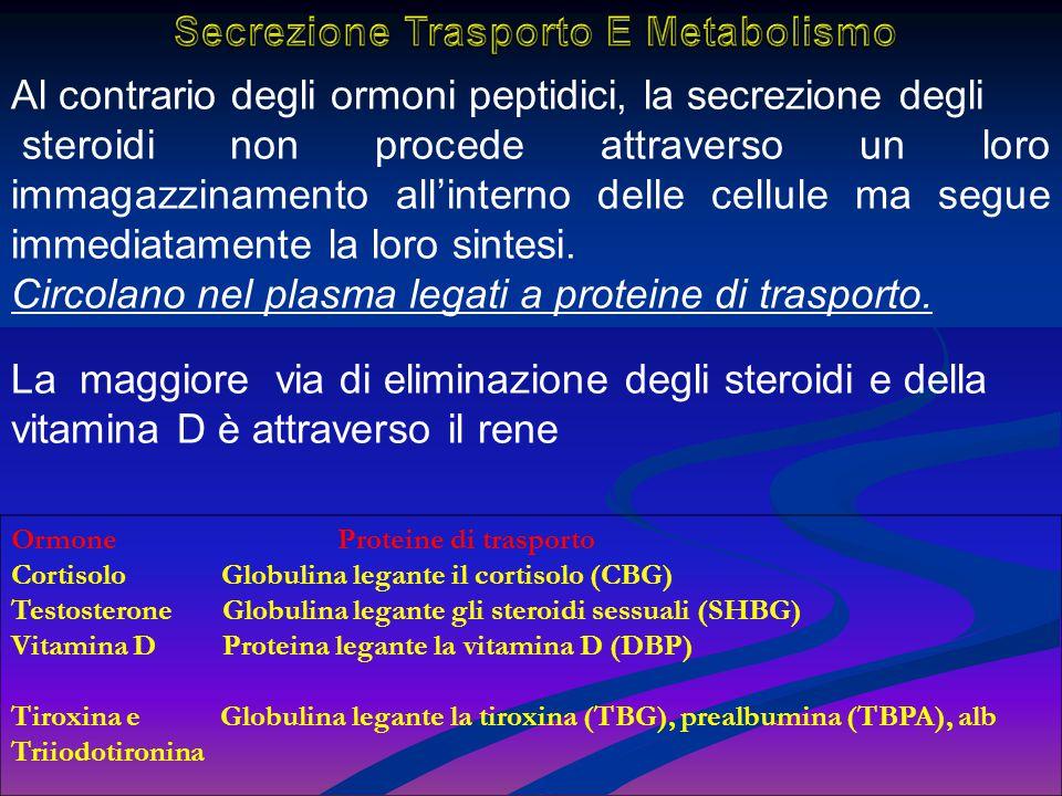 Al contrario degli ormoni peptidici, la secrezione degli steroidi non procede attraverso un loro immagazzinamento all'interno delle cellule ma segue i