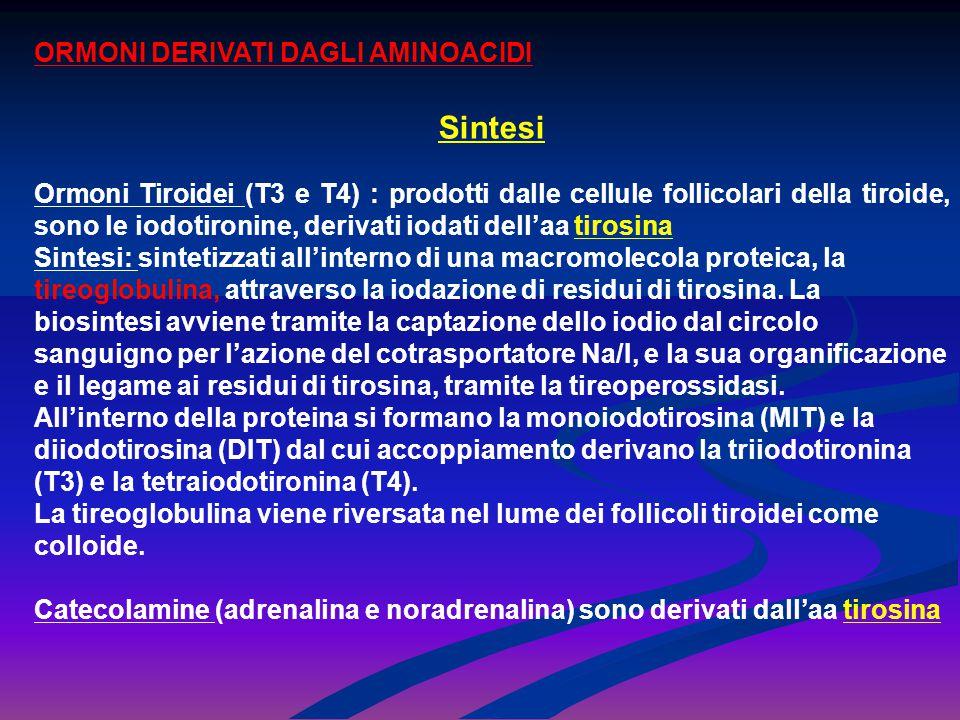 Secrezione Trasporto E Metabolismo La secrezione nel circolo plasmatico avviene grazie alla fagocitosi della colloide in vescicole che si fondono con i lisosomi, all'interno dei quali la tireoglobulina subisce la proteolisi con liberazione di MIT, DIT, T4 e T3 (rapporto 10:1).