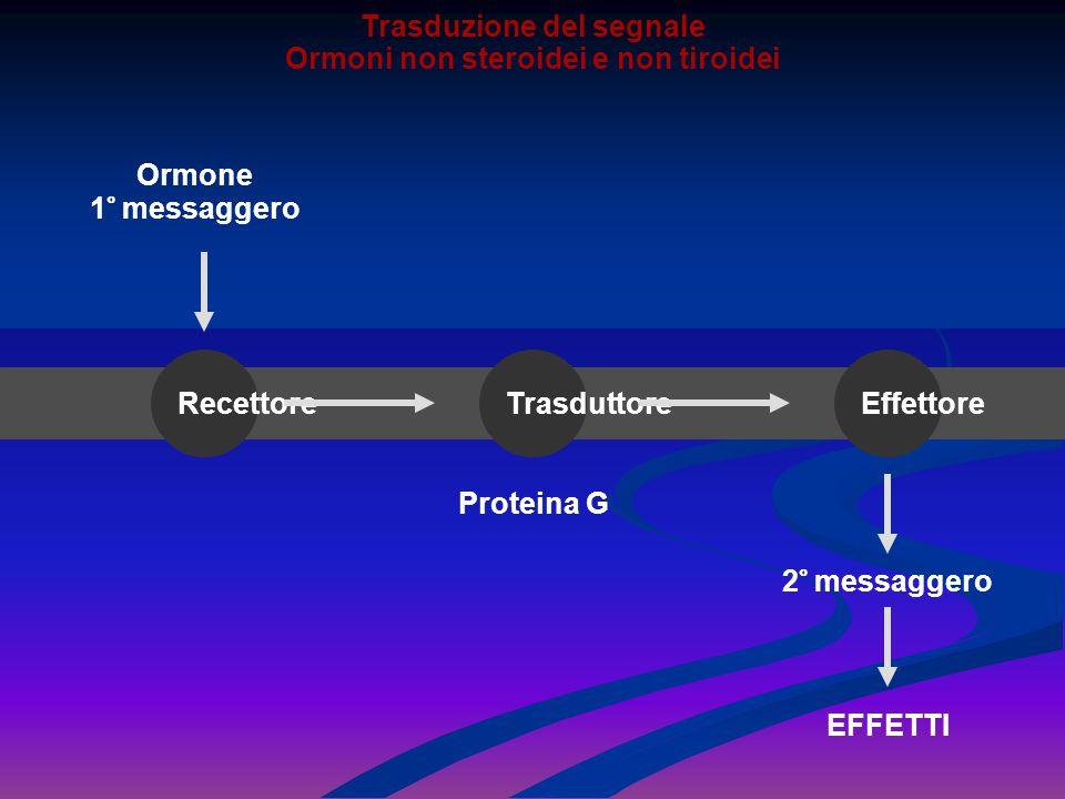Ormone 1° messaggero EFFETTI RecettoreTrasduttoreEffettore 2° messaggero Proteina G Trasduzione del segnale Ormoni non steroidei e non tiroidei