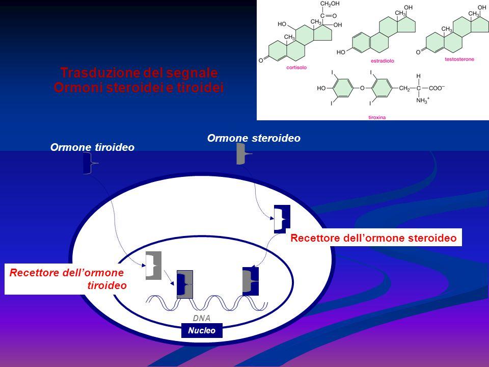 Ormone steroideo Ormone tiroideo Recettore dell'ormone steroideo Recettore dell'ormone tiroideo DNA Nucleo Trasduzione del segnale Ormoni steroidei e