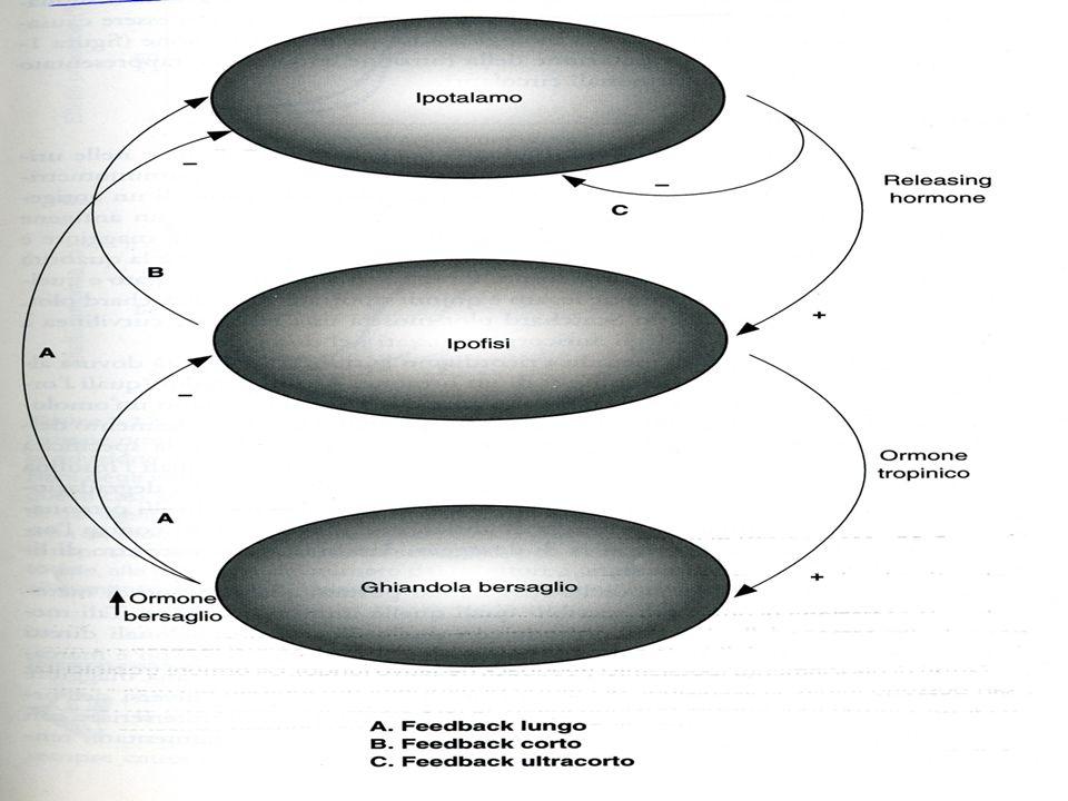 LDLEGFINSULINA SP SPAZIO EXTRACELLULARE CITOPLAMSA NH 2 COOH NH 2 COOH TAD 1 TAD 2 DBDLBD TRASLOCAZIONE NUCLEARE DIMERIZZAZIONE INTERAZIONE CON Hsp90 α β