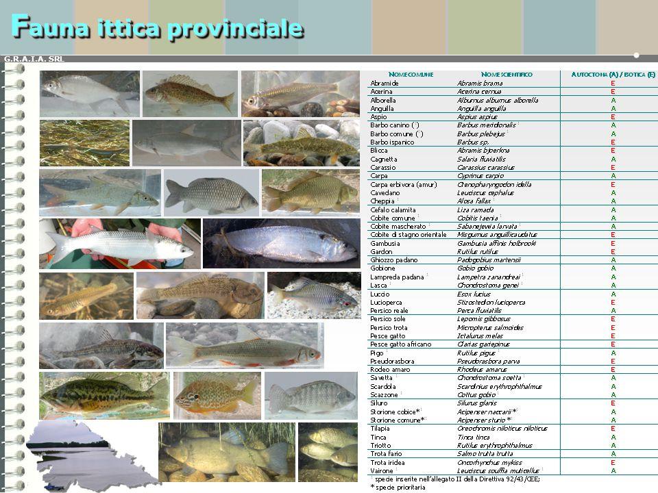 G.R.A.I.A. SRL F auna ittica provinciale