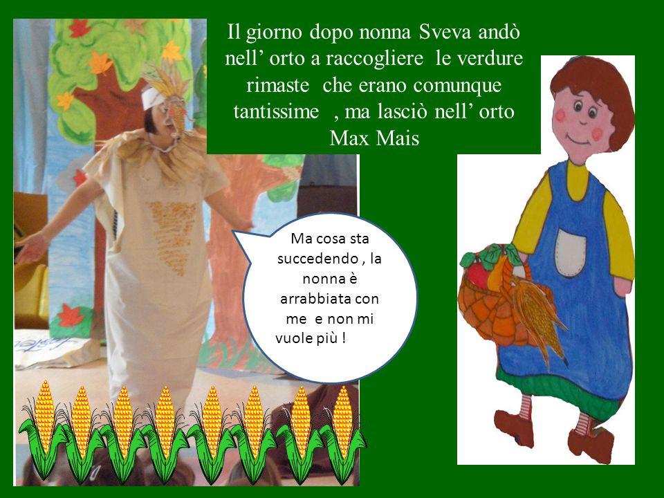 Il giorno dopo nonna Sveva andò nell' orto a raccogliere le verdure rimaste che erano comunque tantissime, ma lasciò nell' orto Max Mais Ma cosa sta succedendo, la nonna è arrabbiata con me e non mi vuole più !vuole !
