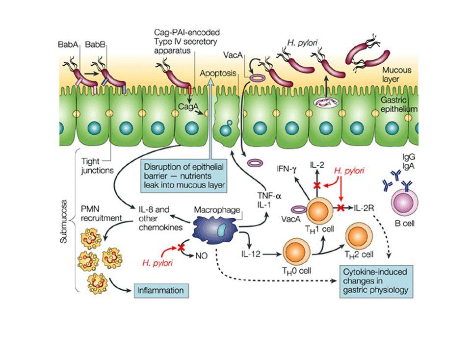 H.Pylori produce ureasi che idrolizzano l'urea in CO 2 e ammoniaca creando un ambiente basico intorno alla colonia batterica ma aumentando l'acidità d