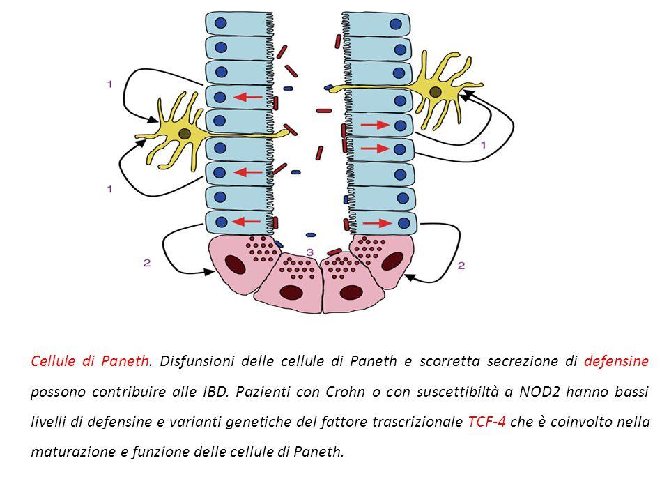 Fattori patogenetici Fattori genetici: NOD2 codifica per una proteina che si lega ai peptidoglicani batterici e attiva NFkB. Varinati di NOD2 rendono