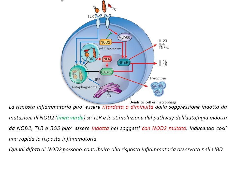 Le cellule epiteliali intestinali e le dendritiche riconoscono agenti infettivi distinti e producono fattori che danno risposta diversa. (black) I leu