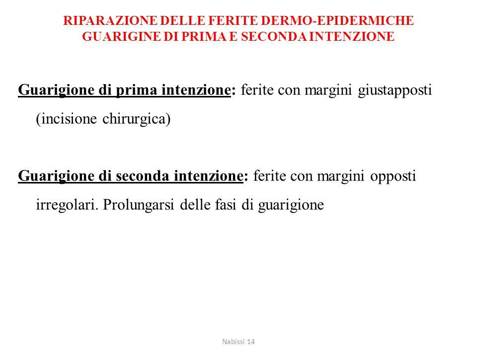 ECCESSO DI RIPARAZIONE: GENESI DELLA FIBROSI Nabissi 14