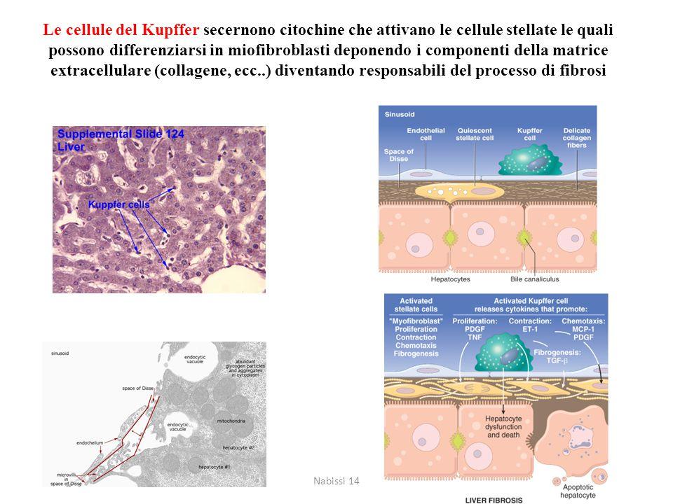 CIRROSI EPATICA CIRROSI A LIVELLO MACROSCOPICO E MICROSCOPICO Fegato cirrotico Fegato normale Nabissi 14
