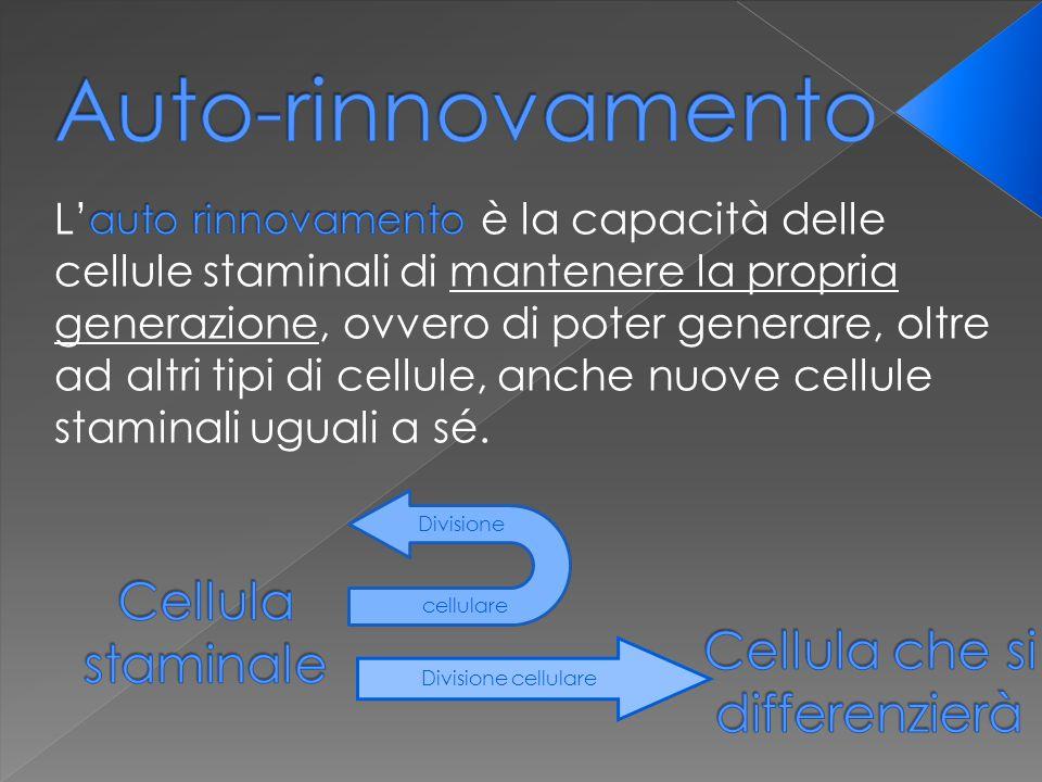 Divisione cellulare Divisione cellulare