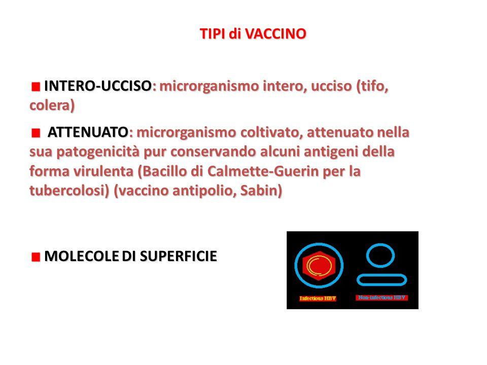 ATTENUATO: microrganismo coltivato, attenuato nella sua patogenicità pur conservando alcuni antigeni della forma virulenta (Bacillo di Calmette-Guerin per la tubercolosi) (vaccino antipolio, Sabin) ATTENUATO: microrganismo coltivato, attenuato nella sua patogenicità pur conservando alcuni antigeni della forma virulenta (Bacillo di Calmette-Guerin per la tubercolosi) (vaccino antipolio, Sabin) TIPI di VACCINO INTERO-UCCISO: microrganismo intero, ucciso (tifo, colera) INTERO-UCCISO: microrganismo intero, ucciso (tifo, colera) MOLECOLE DI SUPERFICIE MOLECOLE DI SUPERFICIE