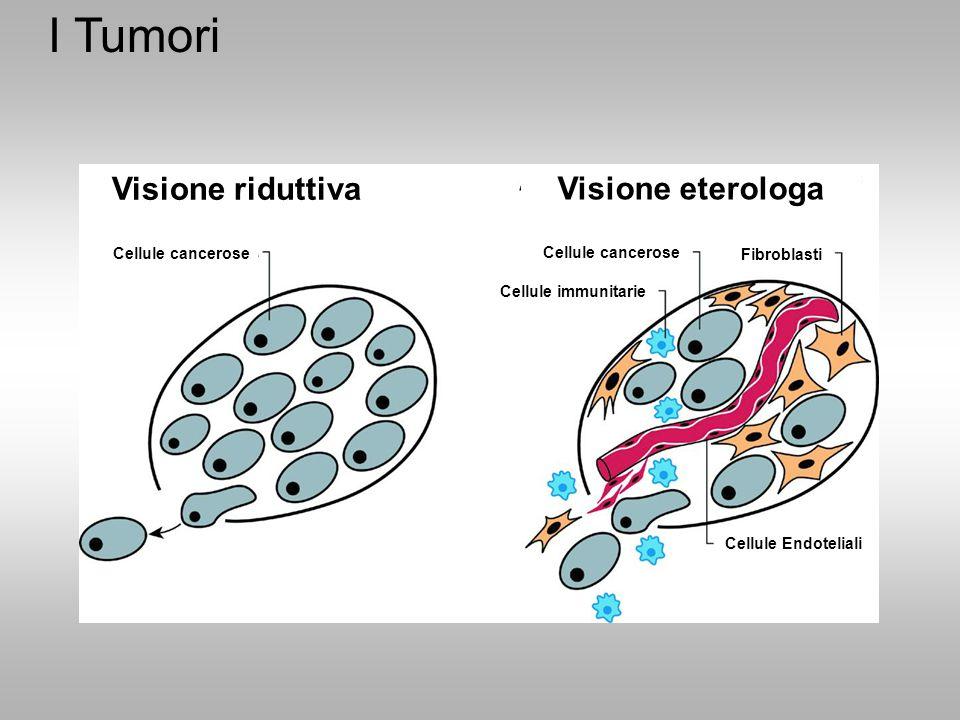 I Tumori Visione riduttiva Cellule cancerose Cellule Endoteliali Cellule immunitarie Cellule cancerose Fibroblasti Visione eterologa