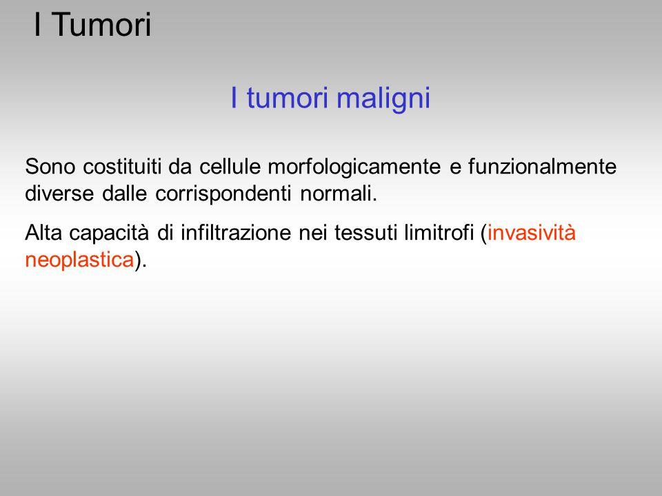 I Tumori Sono costituiti da cellule morfologicamente e funzionalmente diverse dalle corrispondenti normali. Alta capacità di infiltrazione nei tessuti