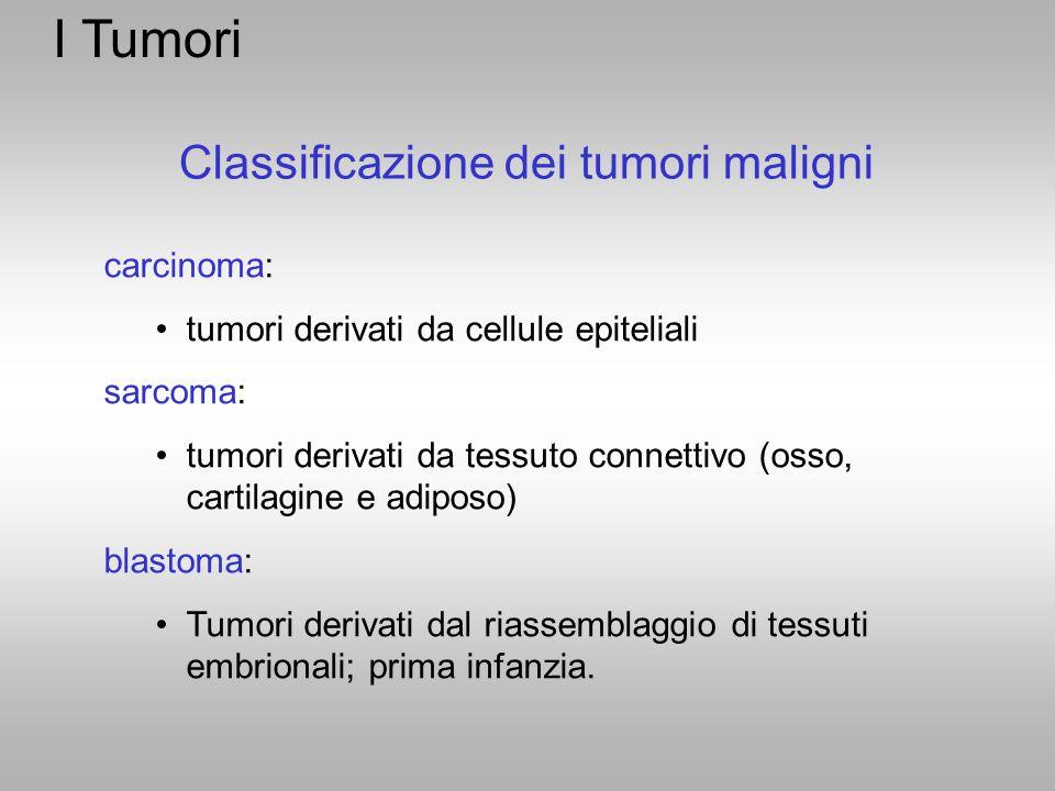 I Tumori Classificazione dei tumori maligni carcinoma: tumori derivati da cellule epiteliali sarcoma: tumori derivati da tessuto connettivo (osso, car