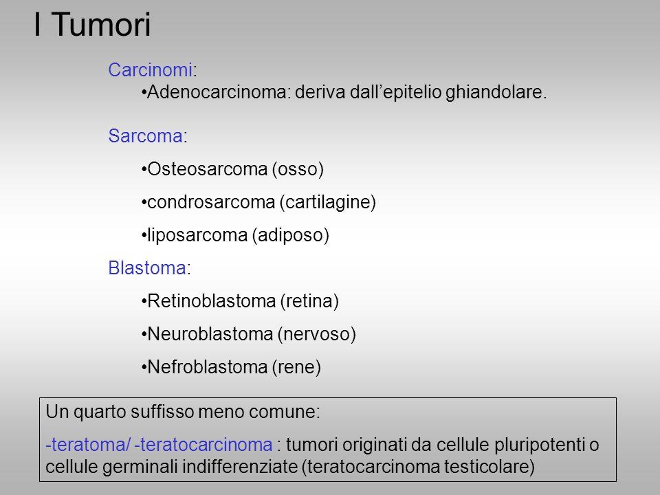 I Tumori Carcinomi: Adenocarcinoma: deriva dall'epitelio ghiandolare. Sarcoma: Osteosarcoma (osso) condrosarcoma (cartilagine) liposarcoma (adiposo) B