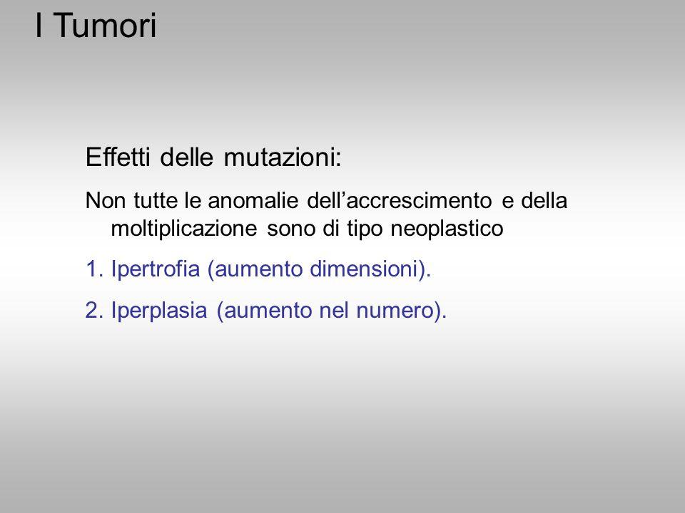 Effetti delle mutazioni: Non tutte le anomalie dell'accrescimento e della moltiplicazione sono di tipo neoplastico 1.Ipertrofia (aumento dimensioni).